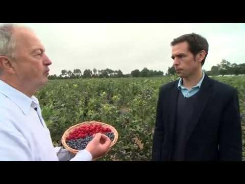 Fruidor Terroirs : La Framboise et la Myrtille