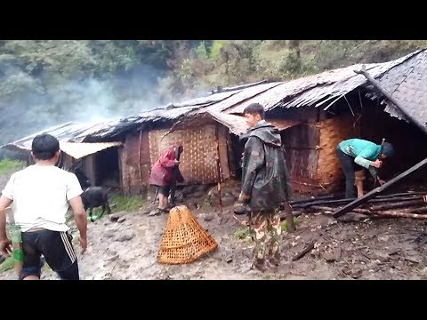 Cowherd Life Into Jungle  || High Himalayan Pasture Land Of Nepal