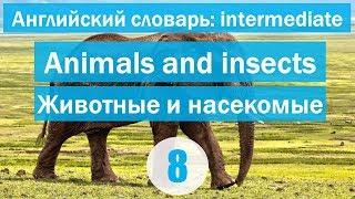 Animals and insects ||Животные и насекомые|| Английский словарь: уровень INTERMEDIATE || Урок #8