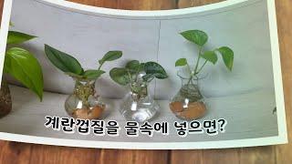 #스킨답서스 종류별로 수경재배하기 #저렴한 수경화병 추…