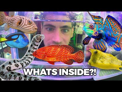 $11,000 MYSTERY FISH!! - Inside Thailand's Largest Aquarium Fish Market... (Part 2)