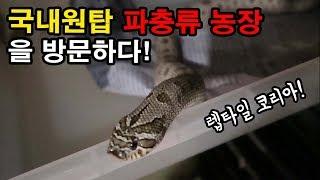 (주노준호)국내 최대 파충류 농장! 렙타일코리아 방문기…