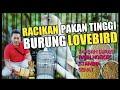 Pakan Konslet Love Bird Bikin Ngekek Panjang  Mp3 - Mp4 Download