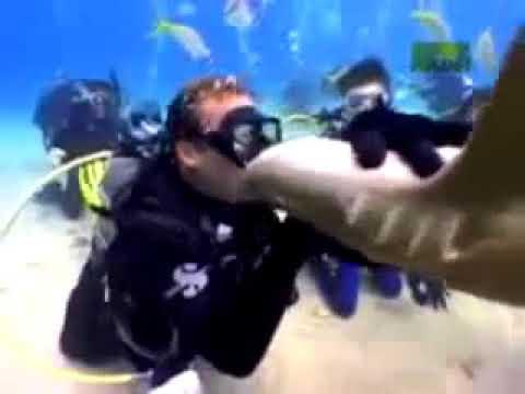 ТОП 10 самых жестких нападений акул