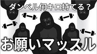 ゴリラオンステージ「お願いマッスル/ダンベル何キロ持てる?OPテーマ」
