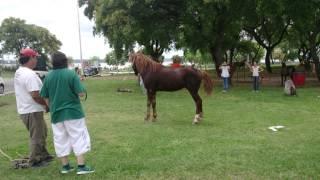 Reacción de un caballo esclavo liberado !!!!