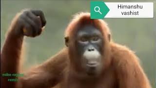 pilla palungi jarur chahe jaan chali jaye monkey song