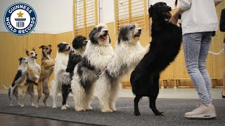 Longest Dog Conga - Guinness World Records