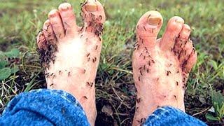 Warum die Mücken saugen!