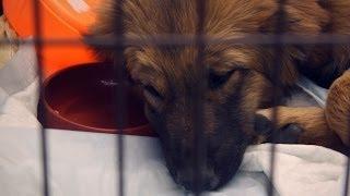 Бездомные животные - социальная реклама | Homeless animals, social ad video