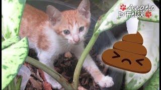 Kitten diarrhea?  What to do?