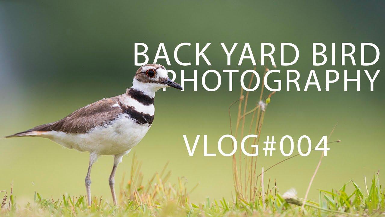 birding photography vlog 004 youtube