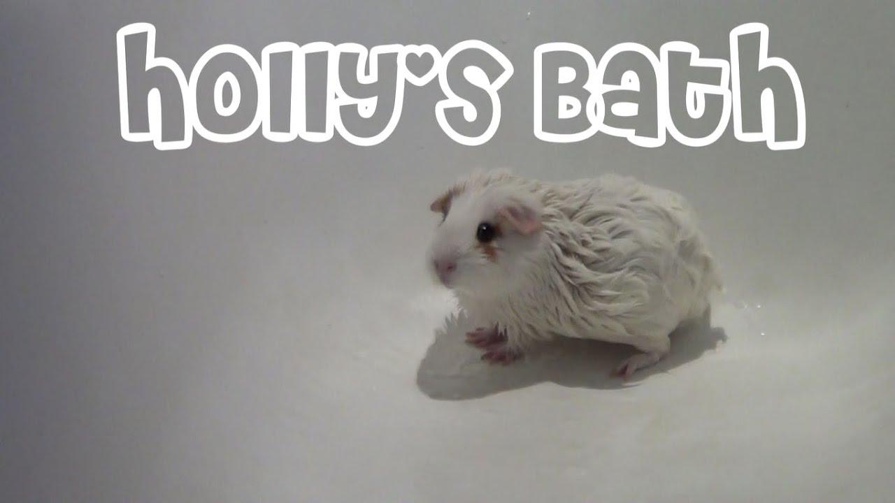 Holly's Bath | Static Lice (Hay Mites) Treatment 🛀