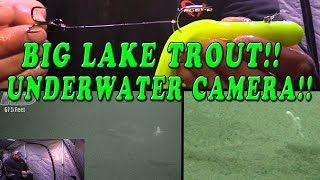 Lake Trout on Underwater Camera!