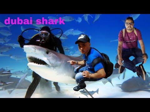 dubai mall aquarium and underwater zoo | dubai mall aquarium crocodile | dubai mall aquarium shark |