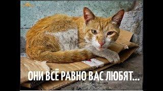 Социальная реклама про бездомных животных: Они все равно вас любят!