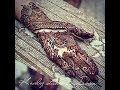 Intricate henna design  bridal mehndi  wedding  Indian henna  body art