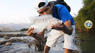 Pesca de Tilapia Grande con el mejor cebo de agua dulce