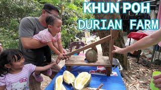Khun Poh Durian Farm Balik Pulau Penang Malaysia มากินทุเรียนถึงสวนบนเกาะปีนัง ที่ปอกทุเรียน
