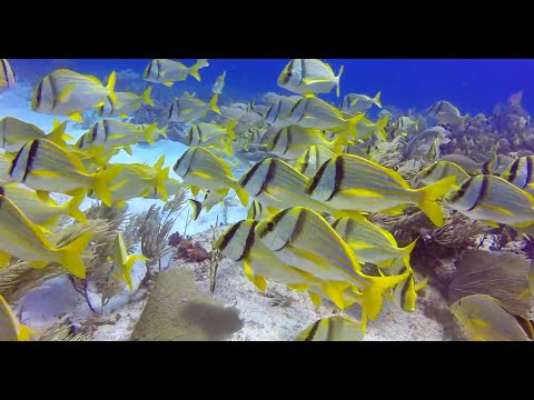 Scuba Diving with Wet Set Diving Adventures, Puerto Morelos
