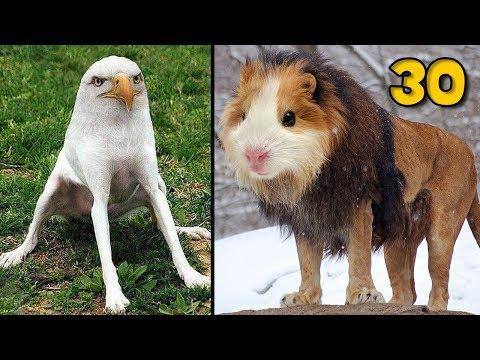 30 ภาพ เมื่อสัตว์ทุกชนิด ผสมพันธุ์กันได้ มันจะเป็นยังไง   OKyouLIKEs