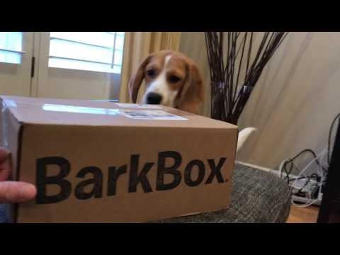 Unboxing a Bark Box with Oliver the beagle