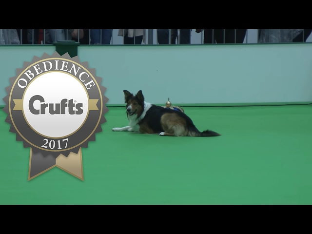 Obedience Championship - Dogs - Part 4 | Crufts 2017