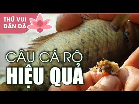0529 Chia Sẻ Cách Câu Cá Rô Đồng Hiệu Quả l Câu Cá Thiên Nhiên ở Sài Gòn ??? Câu Dính Thủy Quái
