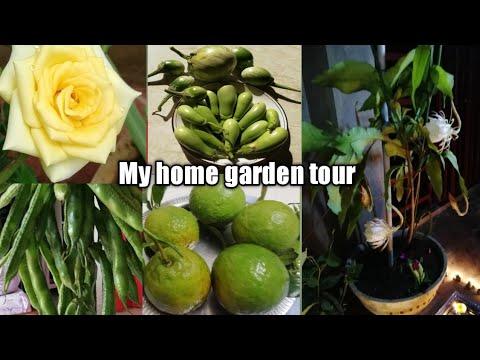 Home garden tour ll organic farming ll horticulture