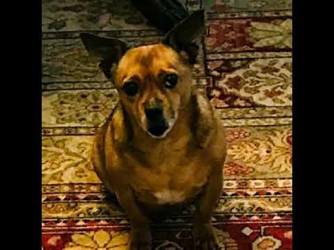 Radar The Dog Is BayLee's Friend
