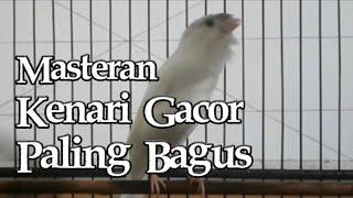 Download lagu KENARI GACOR NGEROLL PANJANG NEMBAK CENGKOK MEWAH