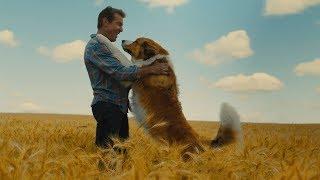 Подорож хорошого пса. Офіційний трейлер (український)
