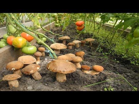 Мицелий белого гриба в Ростове-на-Дону. Сравнить цены