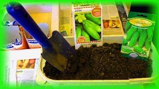 Два способа посадки огурцов на рассаду(Как сажать рассаду. В видео мы показали два очень удобных и доступных способа посадки семян огурцов на расс..., 2016-03-05T11:57:05.000Z)