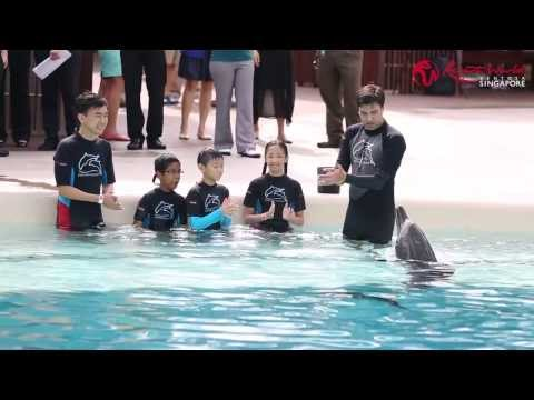10 Lucky Kids meet our Indo-Pacific Bottlenose Dolphins for the first time!
