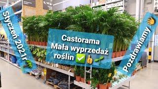 Mala Wyprzedaz Roslin W Castorama Styczen 2021 Rosliny Do Domu W Sloiku Kwiaty Palmy Odc1235 Youtube