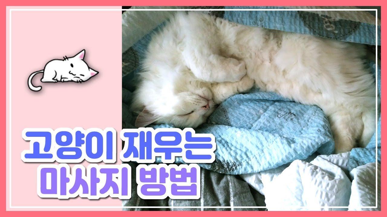 고양이 재우는 마사지 방법   How to put a cat to sleep - YouTube