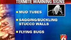 Understand Your Termite Bond Contract