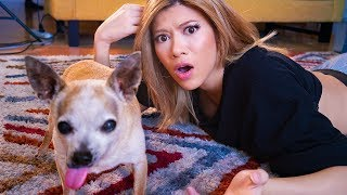 Download I DNA Tested My Mutant Chihuahua Mp3 and Videos