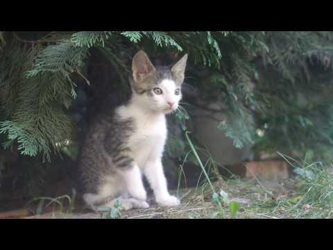 Kittens hiding in a tree 4k UHD 🐈 🐱Tall Ships (Audionautix)
