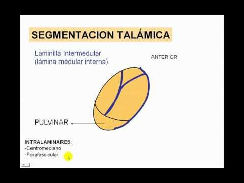talamica