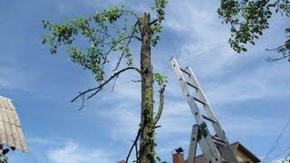 Пилим старое дерево(Мой второй канал