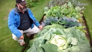 これが白夜パワーか!アラスカで競うように育てられる超巨大野菜の数々