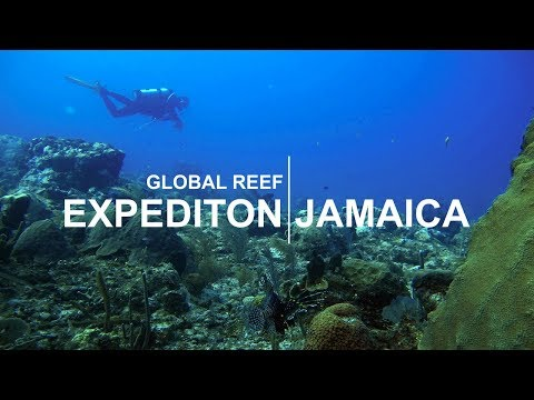 Global Reef Expedition: Jamaica