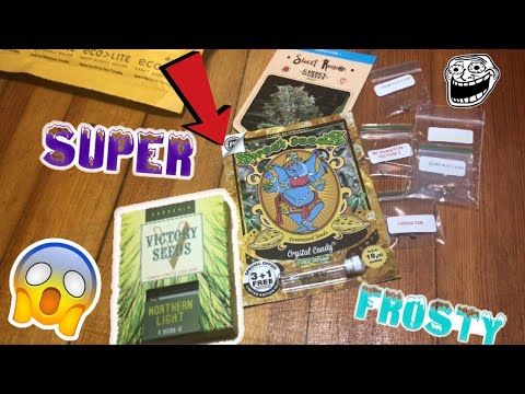 Growing Weed: New Seeds First Grow Ep.1