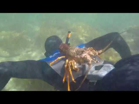 Swimming With A Friendly Crayfish