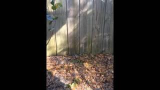 Neighbor's Dog Barking / Yapping On Windy Afternoon