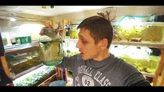 Моллинезия черная (аквариумная рыбка), белая, баллон