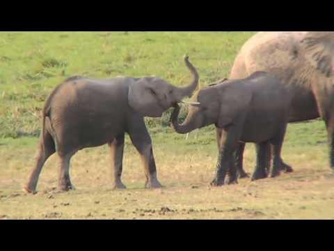 Wings over Kenya, an African Safari (2007)