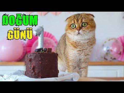 KEDİMİZ MİLA'NIN DOĞUM GÜNÜNÜ KUTLADIK !! (Kedim 1 Yaşında)